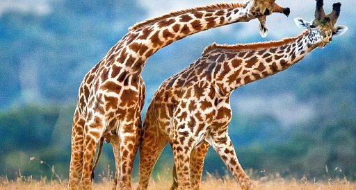 В Зоопарке ОАЭ открылись домики для отдыха в условиях дикой природы